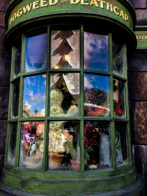 Dogweed and Deathcap Window Shopping at The Wizarding World of Harry Potter via BrytonTaylor.com